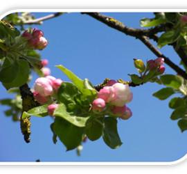 Blüten im hauseigenen Garten